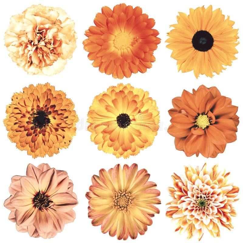 Rétro sélection de fleurs de divers vintage d'isolement sur le blanc photos stock