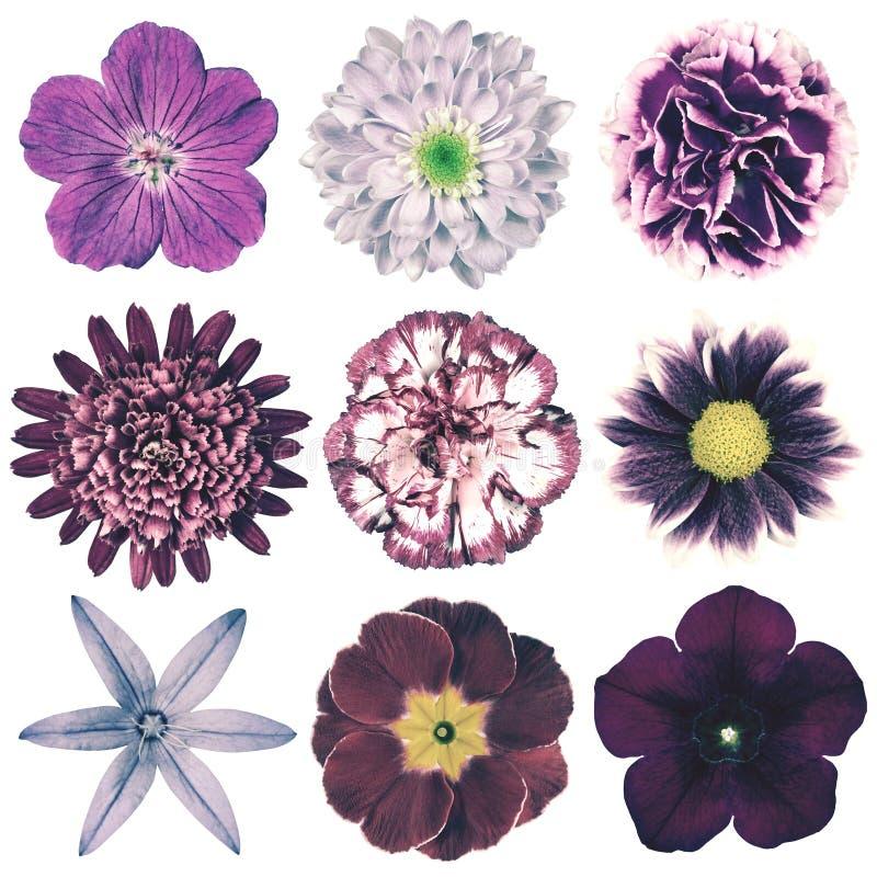 Rétro sélection de fleurs de divers vintage d'isolement sur le blanc image libre de droits