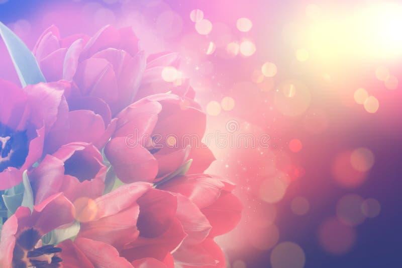 Rétros tulipes avec des lumières de bokeh photographie stock