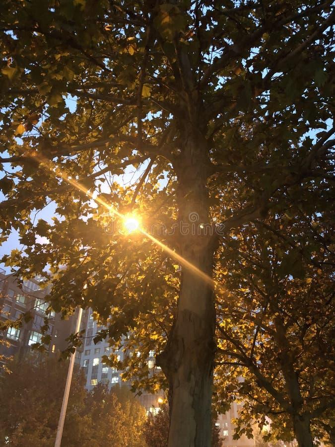 Réverbère avec l'arbre photo stock