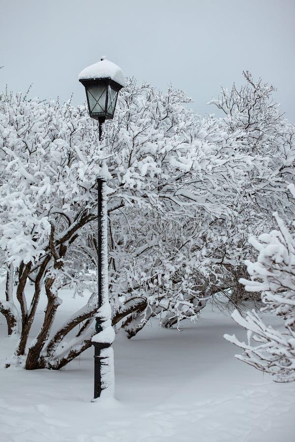 Réverbère en parc de neige photos libres de droits