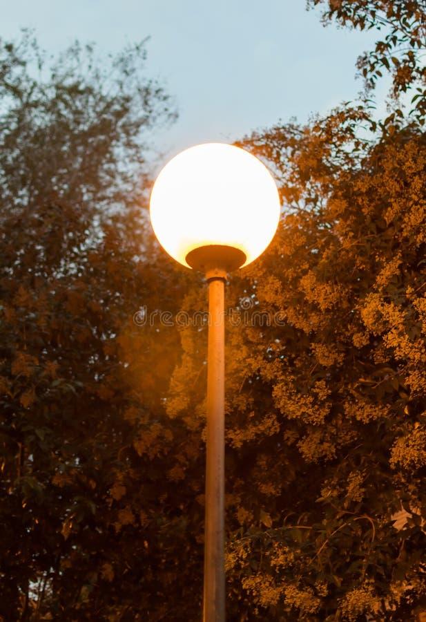 Réverbère sous un arbre la nuit dans l'obscurité avec le plan rapproché léger jaune photo stock