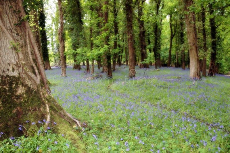 rêve bleu photo stock