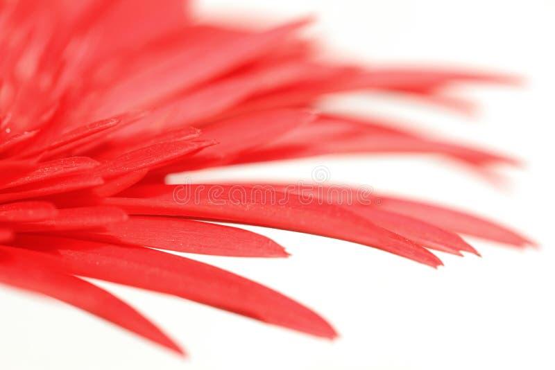 Rêve de fleur image libre de droits
