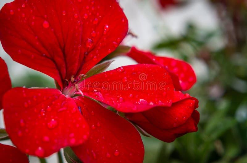 Rêve de fleur photo stock