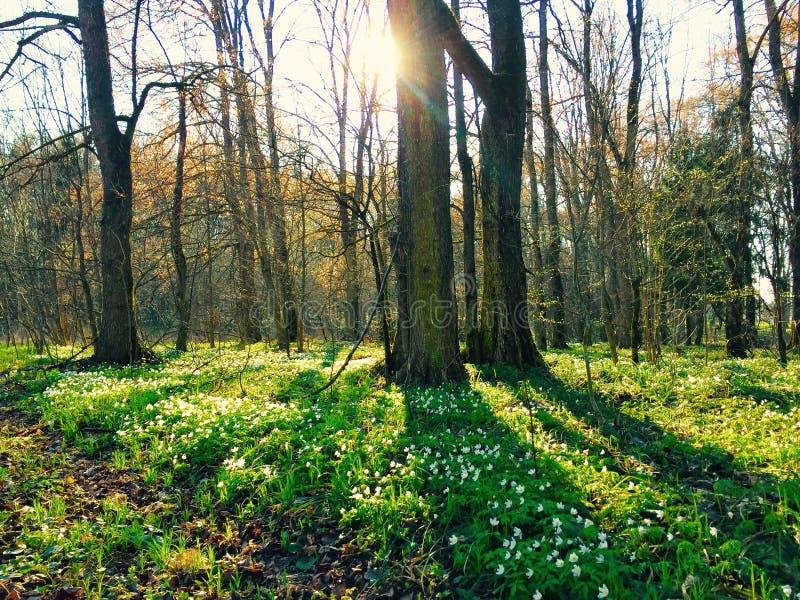 Rêve de forêt photographie stock libre de droits