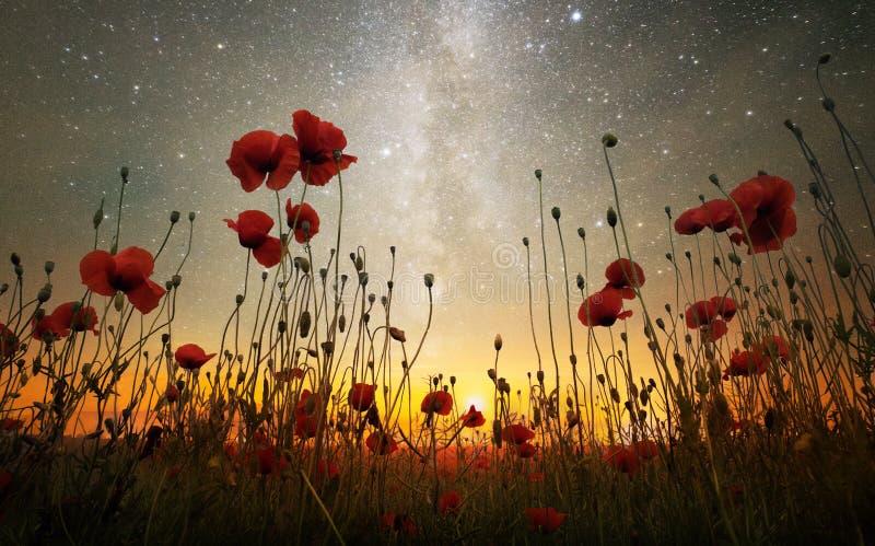 Rêve de la nuit de milieu de l'été image libre de droits