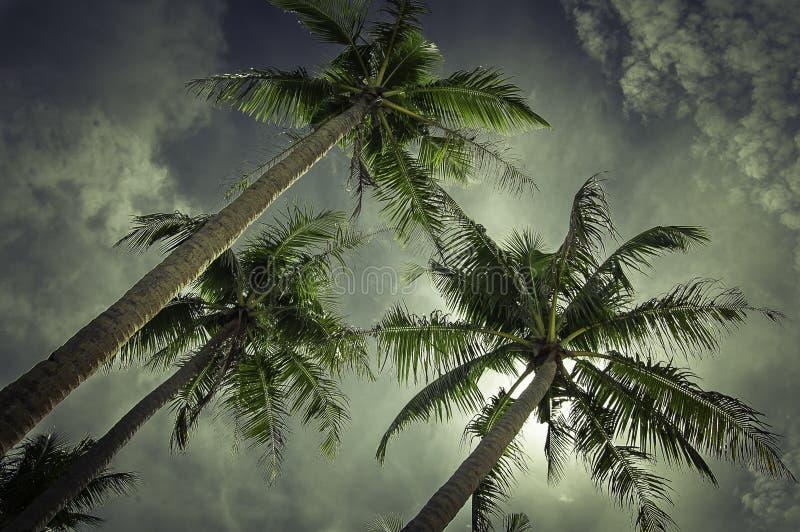 Rêve de Palmtree image stock