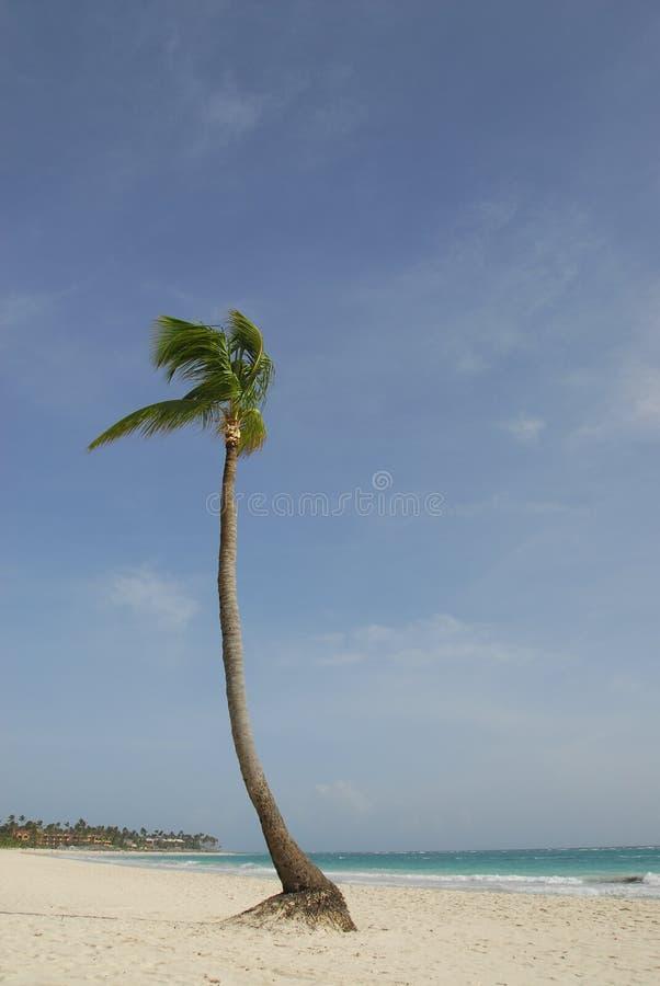 rêve de plage photo stock