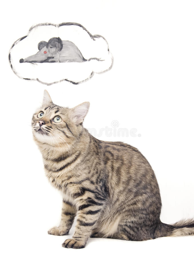 Rêver le chat image stock