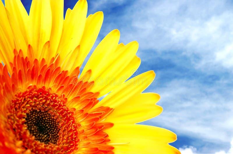 Download Rêveur photo stock. Image du bleu, tournesol, nuages, ciel - 79136