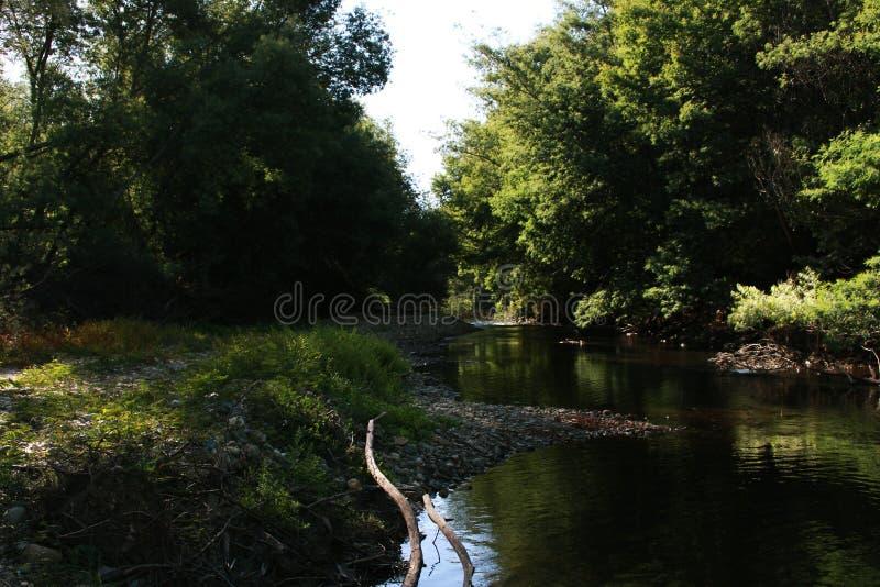río adentro rodeado por los árboles imagen de archivo libre de regalías