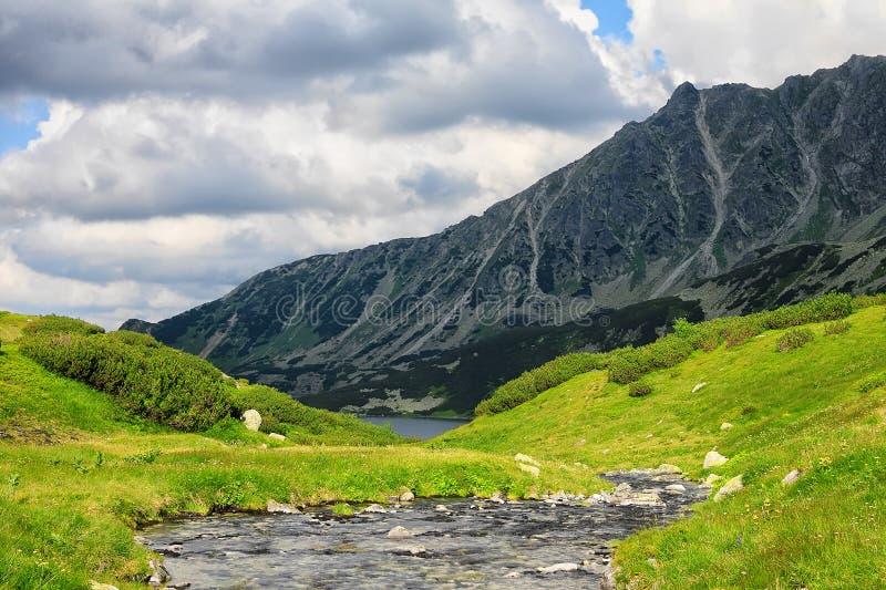 Río alto en montañas con las orillas cubiertas con la hierba amarillenta fotografía de archivo libre de regalías