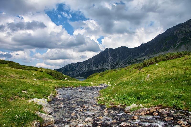 Río alto en montañas con las orillas cubiertas con la hierba verde adentro fotos de archivo libres de regalías