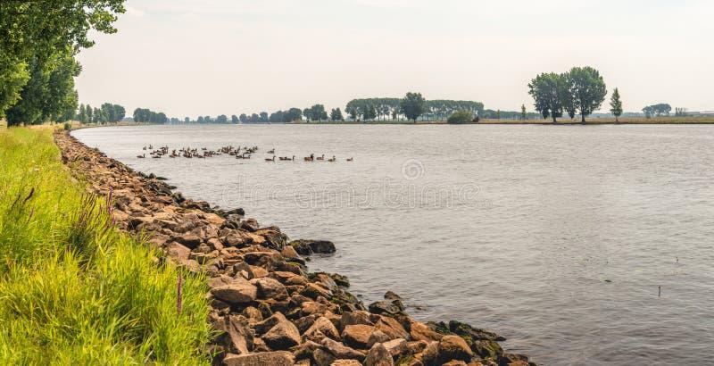 Río ancho con los gansos de Canadá imagen de archivo