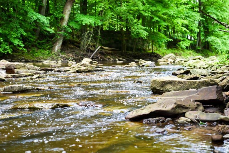Río bajo en la madera fotos de archivo