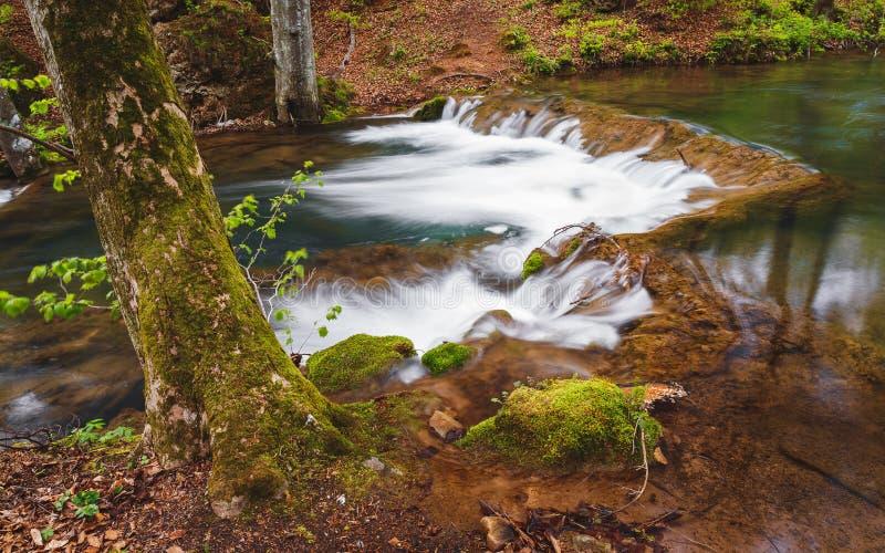 Río claro y rápido de la montaña en el bosque de la primavera foto de archivo