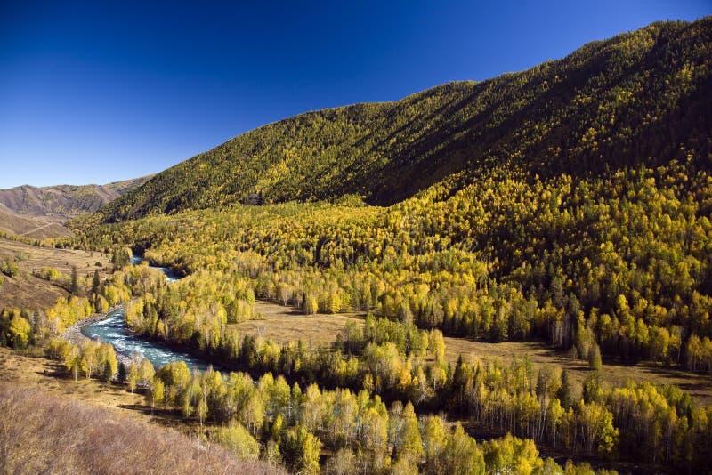 Río con el bosque fotografía de archivo libre de regalías