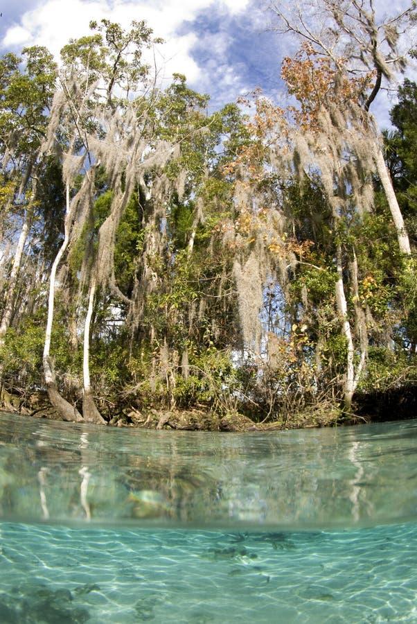Río cristalino escénico fotografía de archivo