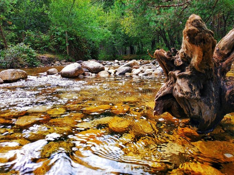 Río de Eresma con un tronco formado extraño de un árbol caido fotos de archivo