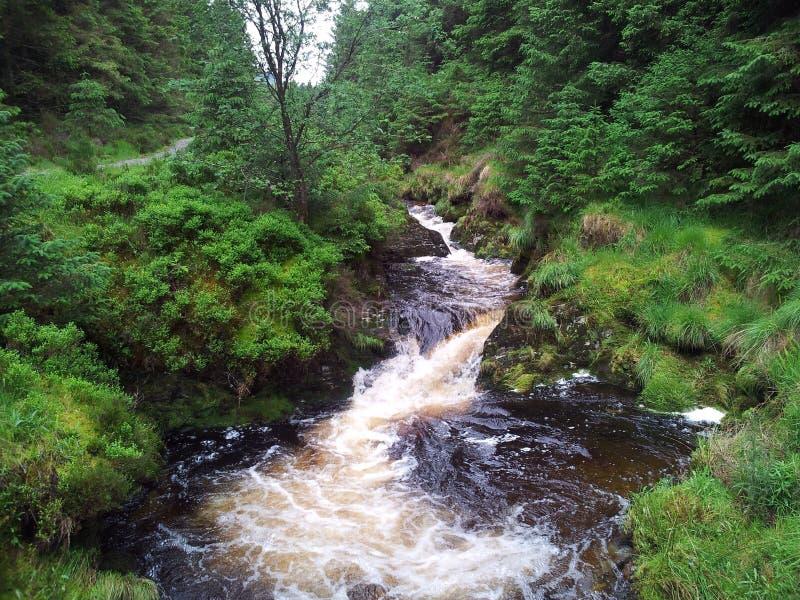Download Río de Forrest foto de archivo. Imagen de agua, río, arbolado - 44856360