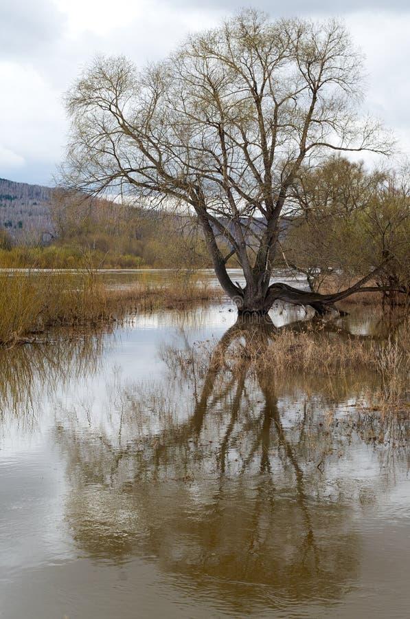 Río de la inundación de la primavera fotografía de archivo libre de regalías