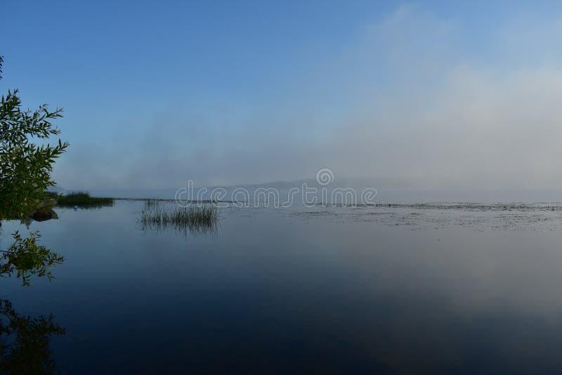 Río de la mañana en la niebla, ramas de árbol que cuelgan bajo sobre el agua, cañas fotos de archivo libres de regalías