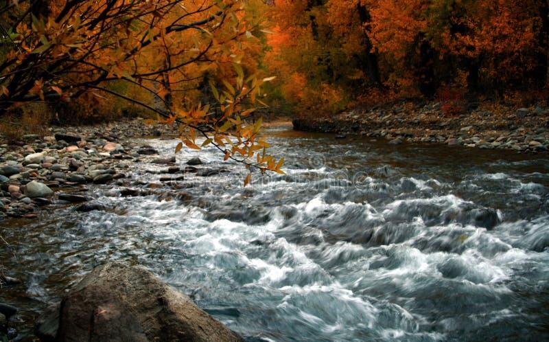 Río de la madera 2 fotografía de archivo