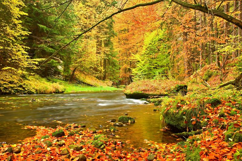 Río de la montaña del otoño Ondas borrosas, piedras y cantos rodados cubiertos de musgo verdes frescos en la orilla del río cubie foto de archivo libre de regalías