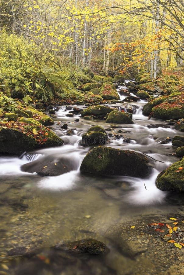 Río de la montaña en último otoño imágenes de archivo libres de regalías