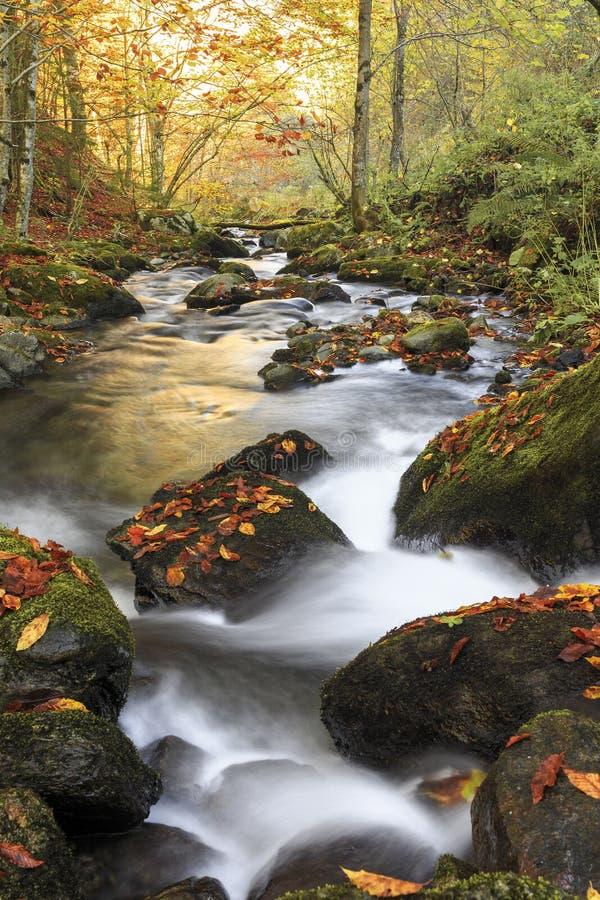 Río de la montaña en último otoño fotos de archivo libres de regalías