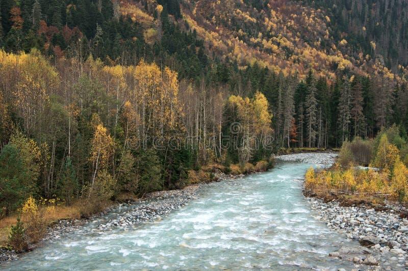 Río de la montaña en bosque foto de archivo libre de regalías