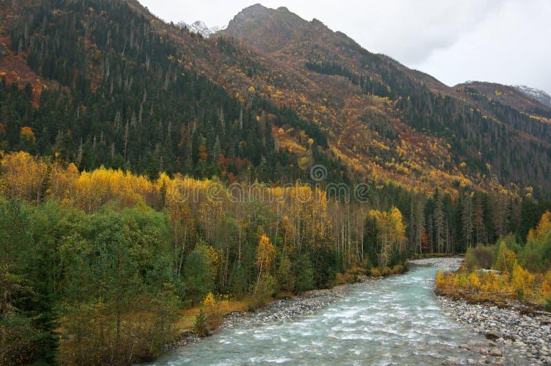 Río de la montaña en bosque otoñal fotos de archivo libres de regalías