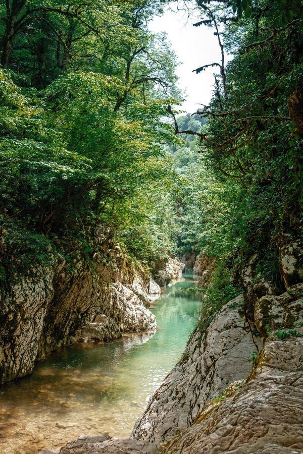 Río de la montaña en el barranco con las cuestas rocosas y los árboles verdes fotos de archivo libres de regalías