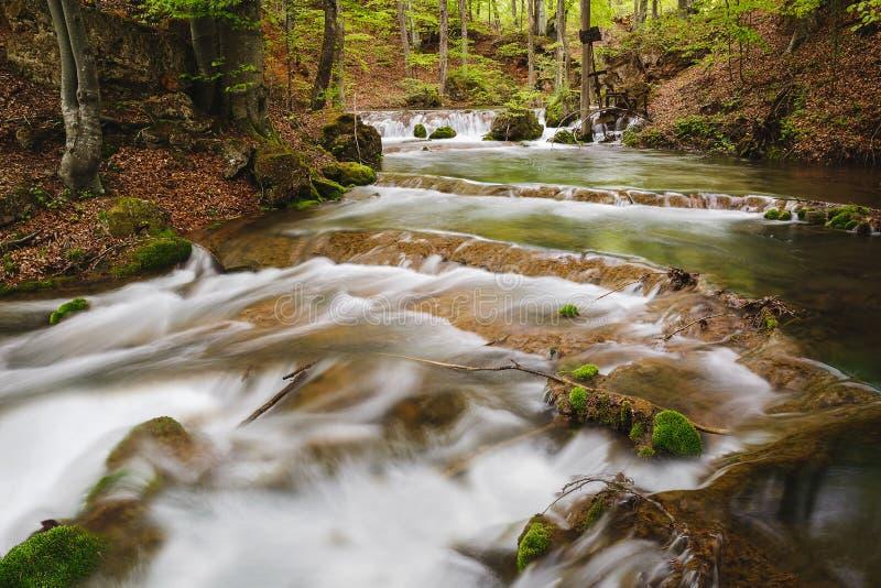 Río de la montaña en el río de Grza del bosque de la primavera, Serbia imagenes de archivo