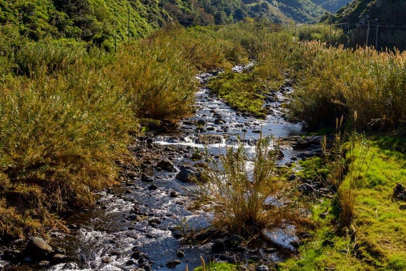 Río de la montaña en la isla de Madeira cerca del sao Jorge portugal fotos de archivo libres de regalías