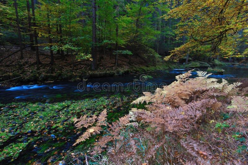 Río de la montaña en niebla colorida del bosque profundo del otoño entre los árboles fotografía de archivo