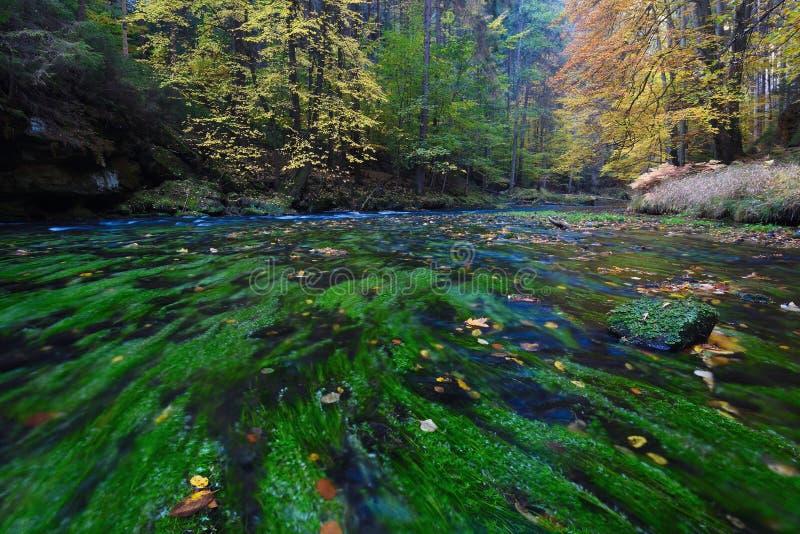Río de la montaña en niebla colorida del bosque profundo del otoño entre los árboles imagenes de archivo