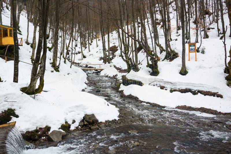 Río de la montaña en primavera temprana en el bosque fotos de archivo libres de regalías