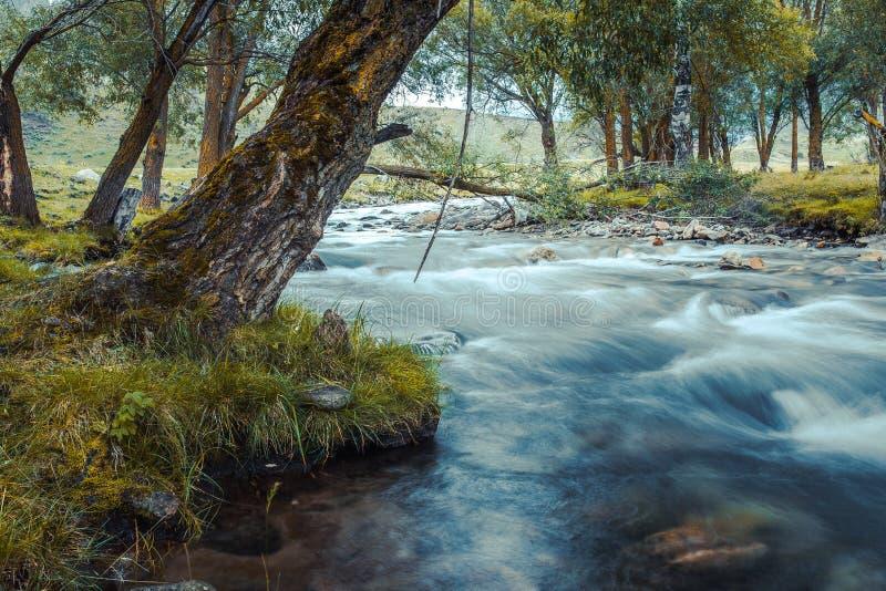 Río de la montaña que fluye entre piedras cubiertas de musgo a través del bosque colorido fotografía de archivo