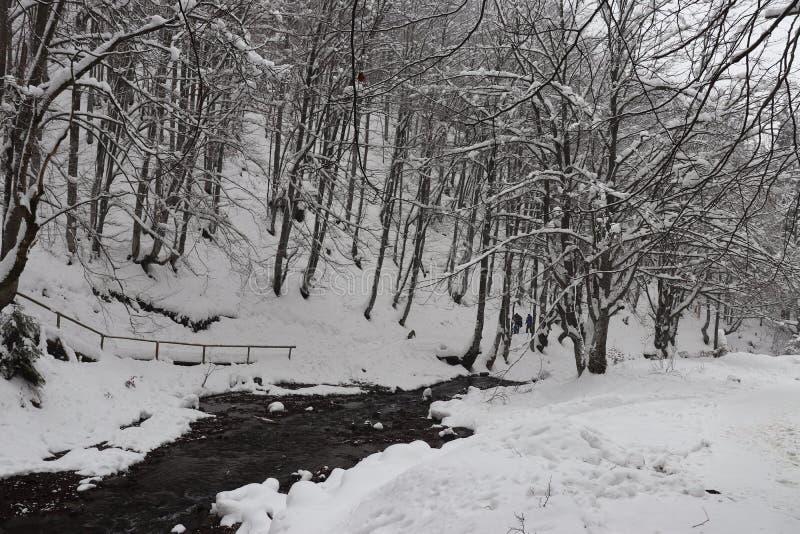 Río de la montaña rodeado por la nieve fotografía de archivo