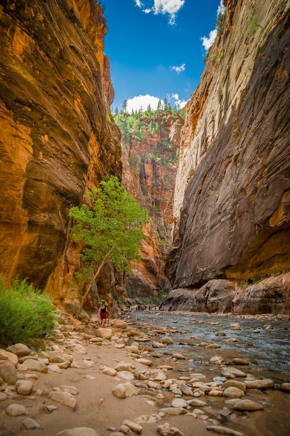 Río de la Virgen en el parque nacional Utah de zion foto de archivo