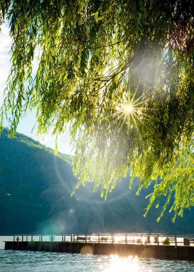 Río de los árboles de las montañas imagen de archivo libre de regalías
