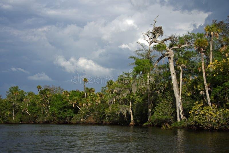 Río de Loxahatchee fotografía de archivo libre de regalías