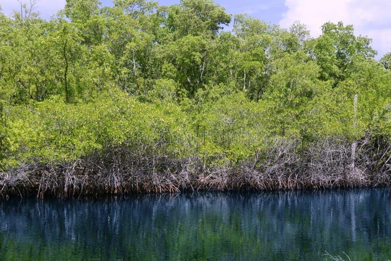 Río de Mangroove en el paisaje de la Florida de los marismas fotos de archivo