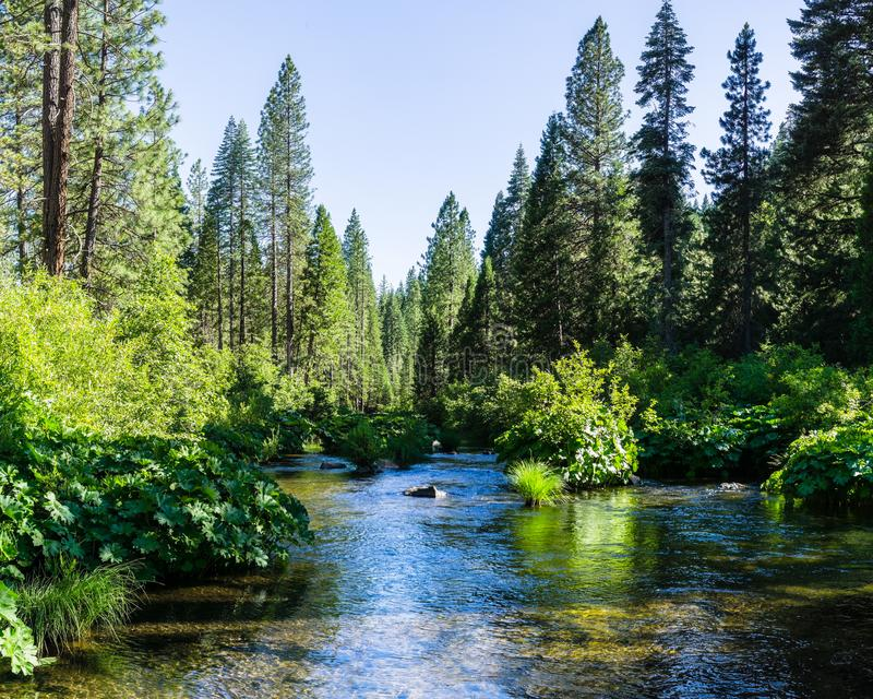 Río de McCloud que atraviesa el bosque del Estado de Shasta, el condado de Siskiyou, California septentrional foto de archivo