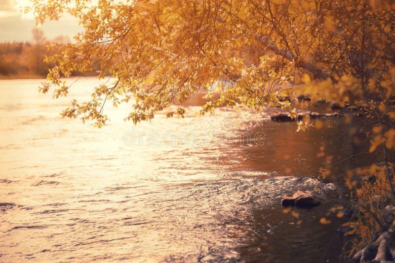 Río de niebla fantástico con la hierba verde fresca en la luz del sol Haces de Sun a través del árbol Paisaje colorido dramático fotografía de archivo