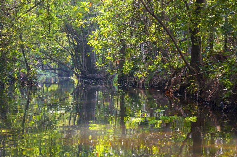 Río de serpenteo de la selva de los remansos de Kerala imagenes de archivo