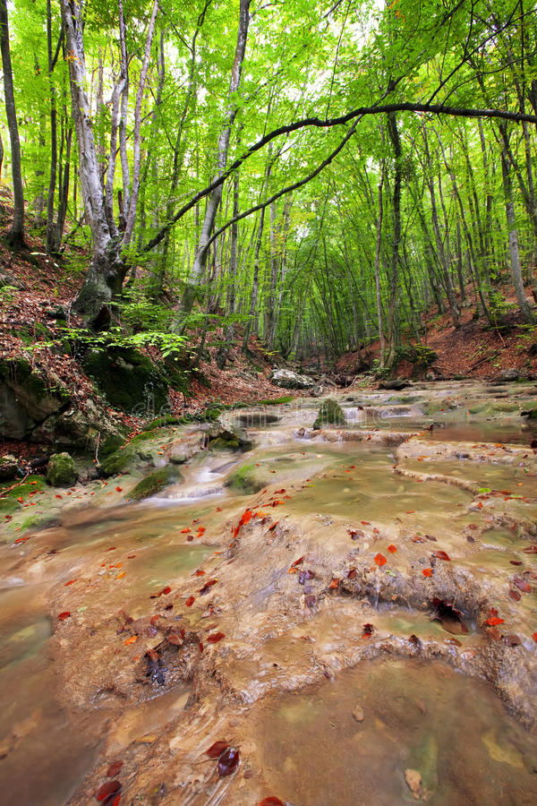 Río del bosque imagen de archivo