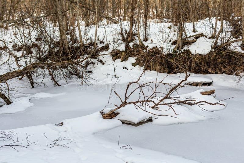 Río del bosque debajo del hielo imágenes de archivo libres de regalías